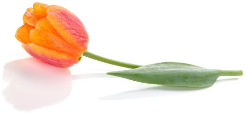 Floral Silo